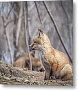 Waiting For Mom Metal Print by Thomas Young
