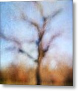 Warner Park Tree Metal Print by David Morel