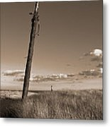 Watching Over The Sea King Metal Print by Mark Miller