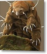 Water Bear Or Tardigrade Metal Print by Science Photo Library