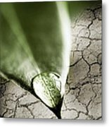 Water Drop On Green Leaf Metal Print by Elena Elisseeva
