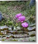 Water Lilly Trio Metal Print by Charles Warren