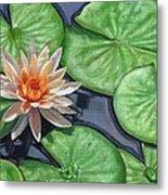 Water Lily Metal Print by David Stribbling