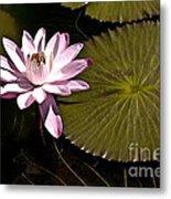 Water Lily Metal Print by Heiko Koehrer-Wagner