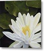 Water Lily Metal Print by Joan Swanson