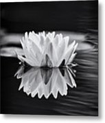 Water Lily Reflection Metal Print by Tim Gainey