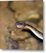 Water Snake Metal Print by Susan Leggett