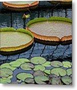 Waterlilies And Platters 2 Metal Print by Byron Varvarigos