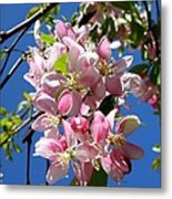 Weeping Cherry Tree Blossoms Metal Print by Carol Groenen