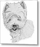 West Highland Terrier Drawing Metal Print by Catherine Roberts