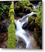 Wet And Green Metal Print by Steven Milner