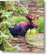 Wet And Wild Metal Print by Feva  Fotos