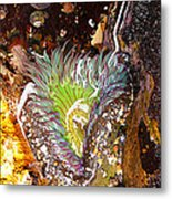 Wet And Wild Metal Print by Ron Regalado