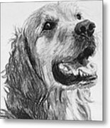 Wet Smiling Golden Retriever Shane Metal Print by Kate Sumners