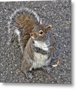 What You Looking At? Metal Print by Joann Vitali