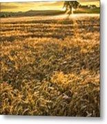 Wheat Fields Of Switzerland Metal Print by Debra and Dave Vanderlaan