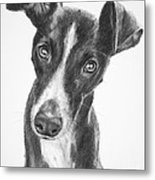Whippet Black And White Metal Print by Kate Sumners