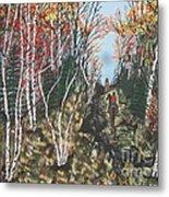 White Birch Trail Ride Metal Print by Jeffrey Koss