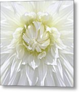 White Dahlia Floral Delight Metal Print by Jennie Marie Schell