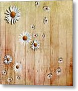 White Daisies Metal Print by David Ridley