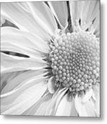 White Daisy Metal Print by Adam Romanowicz