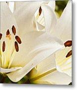 White Flowers Metal Print by Oscar Karlsson