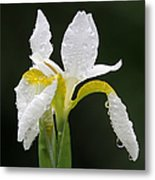 White Iris Metal Print by Juergen Roth