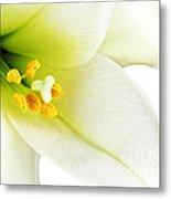 White Lilly Macro Metal Print by Johan Swanepoel