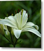 White Lily Metal Print by Sandy Keeton