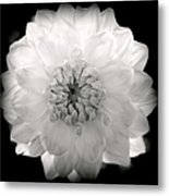 White Magic Metal Print by Karen Wiles