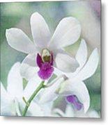 White Orchid Metal Print by Kim Hojnacki