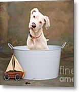 White Pitbull Puppy Portrait Metal Print by James BO  Insogna