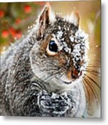 Wild Expedition Metal Print by Christina Rollo