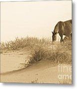 Wild Horse Metal Print by Diane Diederich