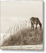 Wild Horse On The Outer Banks Metal Print by Diane Diederich