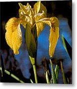 Wild Iris Metal Print by Robert Bales