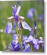 Wild Irises Metal Print by Rona Black