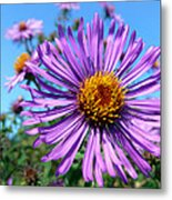 Wild Purple Aster Metal Print by Christina Rollo