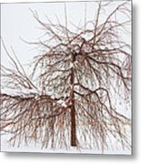 Wild Springtime Winter Tree Metal Print by James BO  Insogna