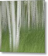 Wind In The Aspen Metal Print by Nancy Myer