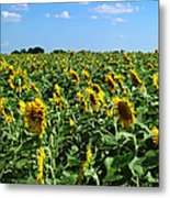 Windblown Sunflowers Metal Print by Robert Frederick