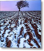 Windswept Tree Scotland Metal Print by John Farnan