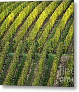 Wine Acreage In Germany Metal Print by Heiko Koehrer-Wagner