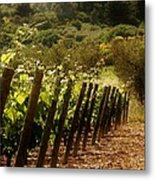 Wine Growing Pouring And Enjoying  Metal Print by Christine Burdine