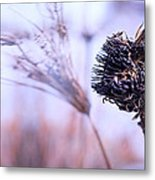 Winter Flowers  Metal Print by Bob Orsillo