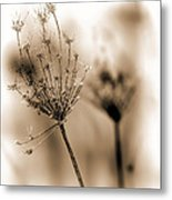 Winter Flowers II Metal Print by Bob Orsillo