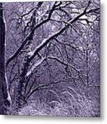 Winter In Purple Metal Print by Carol Groenen