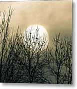 Winter Into Spring Metal Print by Bob Orsillo