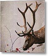 Winter King Metal Print by Julie Magers Soulen