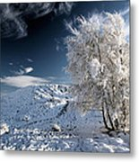 Winter Landscape Metal Print by Grant Glendinning